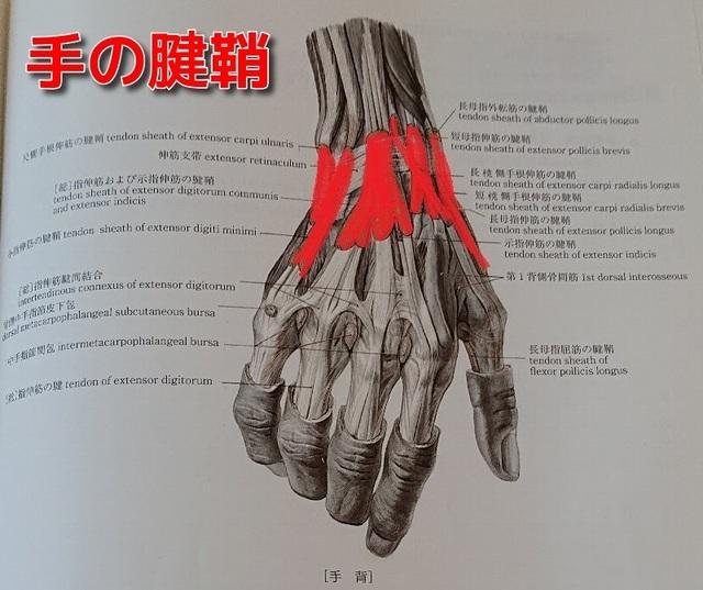 手の腱鞘2.jpg